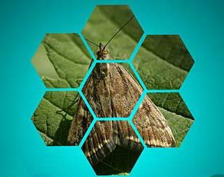 Орбита,КЭ (25 г/л дельтаметрина) - инсектицид для борьбы с вредителями /5л - фото